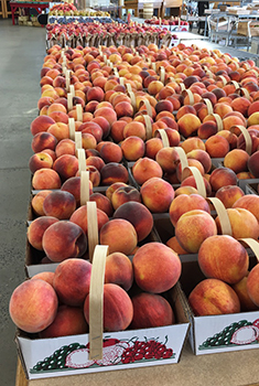 Peaches Montgomery County Maryland